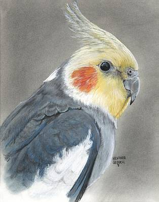 Cockatoo Wall Art - Pastel - Cockatiel by Heather Gessell