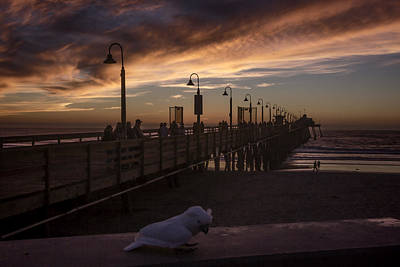 Photograph - Cockatoo At The Pier by Photographic Art by Russel Ray Photos