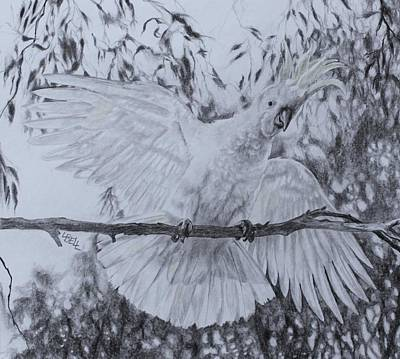 Cockatoo Drawing - Cockatoo by Leonie Bell
