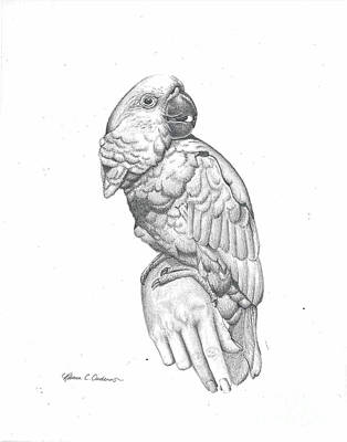 Drawing - Cockatoo Loves by Rebecca Christine Cardenas