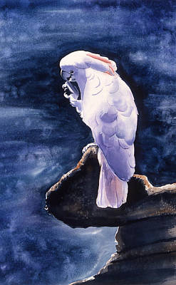 Cockatoo Art Print by Melinda Fawver
