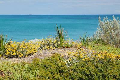 Flower Photograph - Cockburn Beach Dunes 2am-112161 by Andrew McInnes