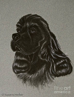 Drawing - Cocker Spaniel by Susan Herber