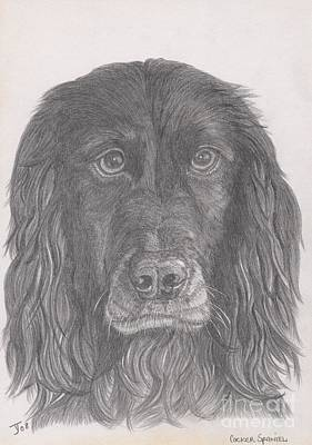 Drawing - Cocker Spaniel by Yvonne Johnstone