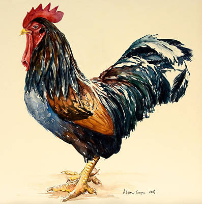 Rooster Painting - Cockerel by Alison Cooper