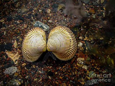 Marine Jewelry Photograph - Cockle by Robert Bales