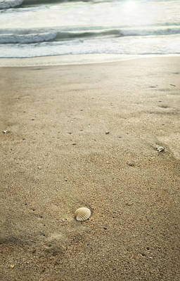 Photograph - Cockle Shell On Florida Beach by Marianne Campolongo