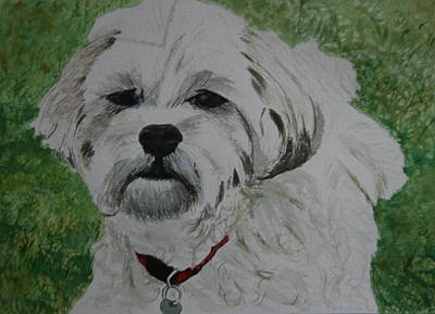 Painting - Coco by Betty-Anne McDonald