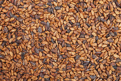 Cocoa Beans Drying Brazil Art Print by Ingo Arndt