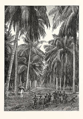 Plantation Drawing - Cocoa-nut Plantation In Ceylon by Sri Lankan School