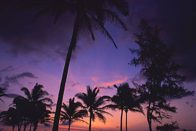 Photograph - Coconut Coast Morning by Morris  McClung
