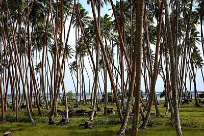 Drawing - Coconut Field by Mike Sangh