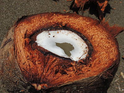 Coconut Art Print by Gregory Young