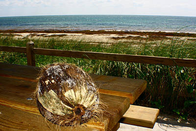 Photograph - Coconut by Jon Emery