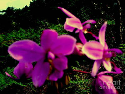 Photograph - Coconut Orchid 2 by Jason Sentuf
