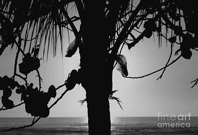 Photograph - Coconut Palm - Cocotier - Ile De La Reunion - Reunion Island by Francoise Leandre