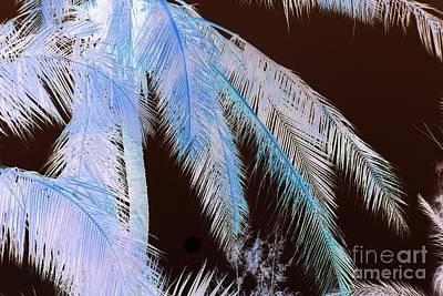 Photograph - Coconut Palm - Reunion Island - Indian Ocean by Francoise Leandre
