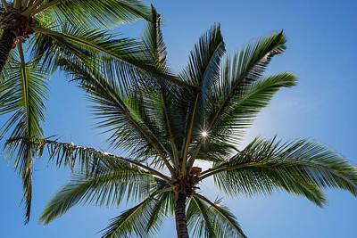 Coconut Palms Backlit By The Sunlight Art Print by Robert L. Potts