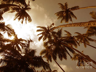 Coconut Palms Art Print