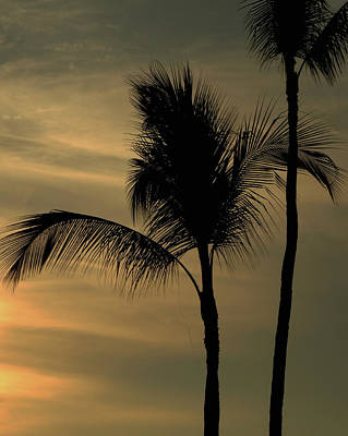 Photograph - Coconut Tree Against The Sunset by Pamela Walton