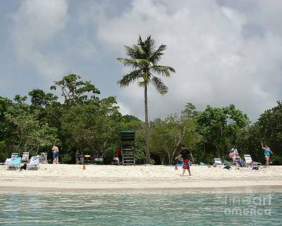 Photograph - Coconut Tree At The Beach by Donna Cavanaugh