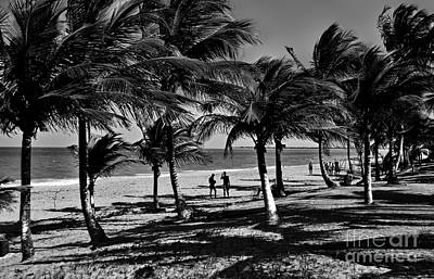 Photograph - Coconut Trees On A Typical Bahia Beach by Carlos Alkmin