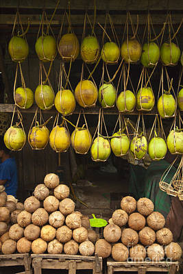 Photograph - Coconuts For Sale by Craig Lovell
