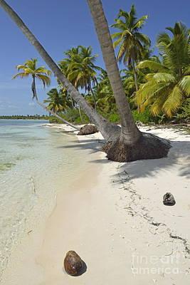 Coconuts On Pristine Tropical Beach Art Print by Sami Sarkis