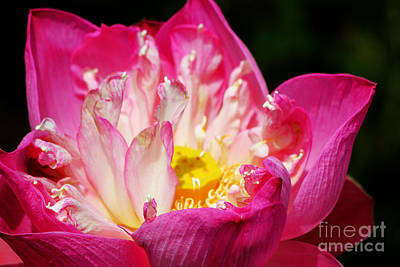 Photograph - Codependent Water Lily  by Nola Lee Kelsey