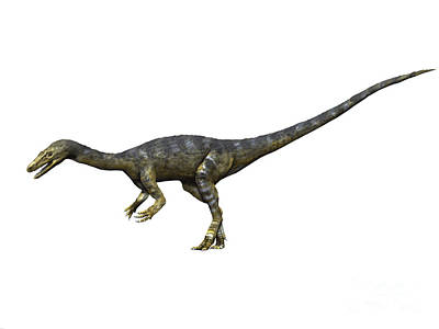 Triassic Digital Art - Coelophysis Dinosaur by Nobumichi Tamura