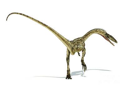 Coelophysis Digital Art - Coelophysis Dinosaur On White by Leonello Calvetti