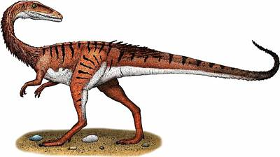 Coelophysis Photograph - Coelophysis by Roger Hall