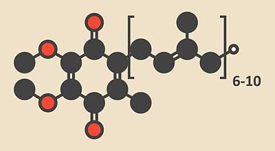 Coenzyme Photograph - Coenzyme Q10 Molecule by Molekuul