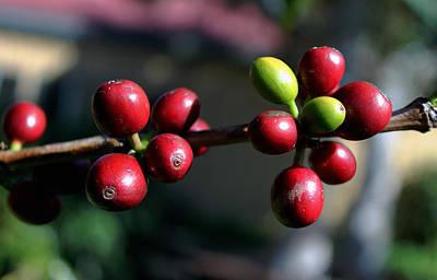 Photograph - Coffee Beans by Pamela Walton