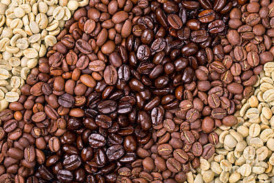 Arabica Photograph - Coffee Selection by Jane Rix
