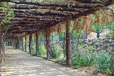 Unc Chapel Hill Photograph - Coker Arboretum - Unc Chapel Hill by David Gellatly
