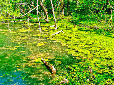 Colbert Creek Along Rock Spring Trail On Natchez Trace Parkway-alabama  Art Print by Ruth Hager