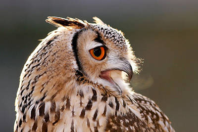 Photograph - Cold Breathe _ Eagle Owl In The Winter by Roeselien Raimond