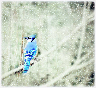 Photograph - Cold Day For A Blue Jay by Peggy Franz