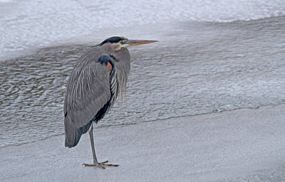 Wall Art - Photograph - Cold Feet by Gary Wing