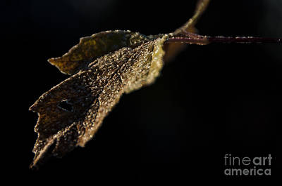 Fall Leaves Photograph - Cold Leaf by Cheryl Baxter