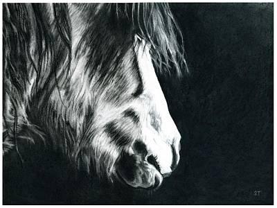 Charcoal Horse Drawing - Cold Light by Shaila Yovan Tenorio