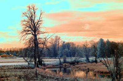 Photograph - Cold Morning by Rebecca Parker