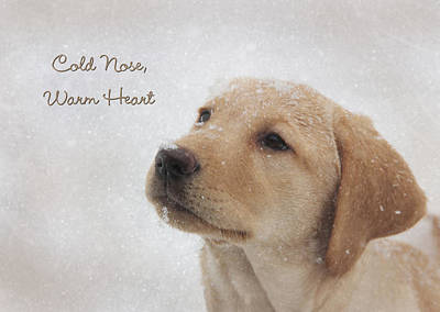 Snowy Photograph - Cold Nose Warm Heart by Lori Deiter