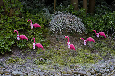 Photograph - Cold Pink Flamingos by Ron Roberts