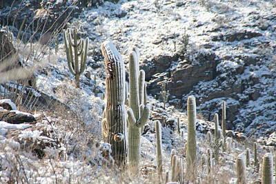 Cold Saguaros Art Print by David S Reynolds