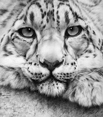 Leopard Drawing - Cold Stare - Drawing by Natasha Denger