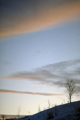 Photograph - Cold Tree by Jon Lord