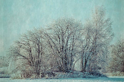 Photograph - Cold Winter Day by Ari Salmela