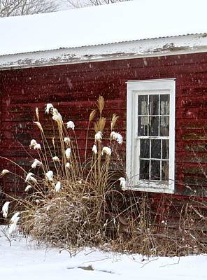 Photograph - Cold Winter Day  by Nancy Patterson
